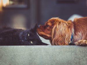 pets fur